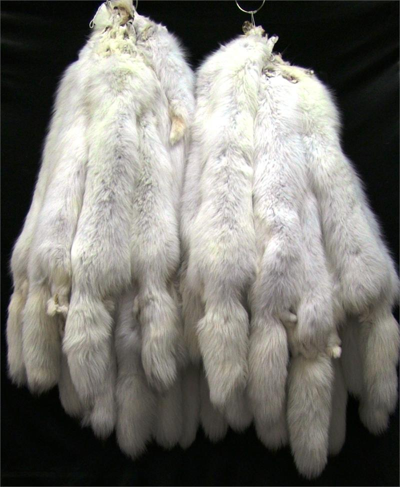 Used Clothing Wholesale >> AuSable™ Brand Tanned Arctic Pelts Bulk Fur