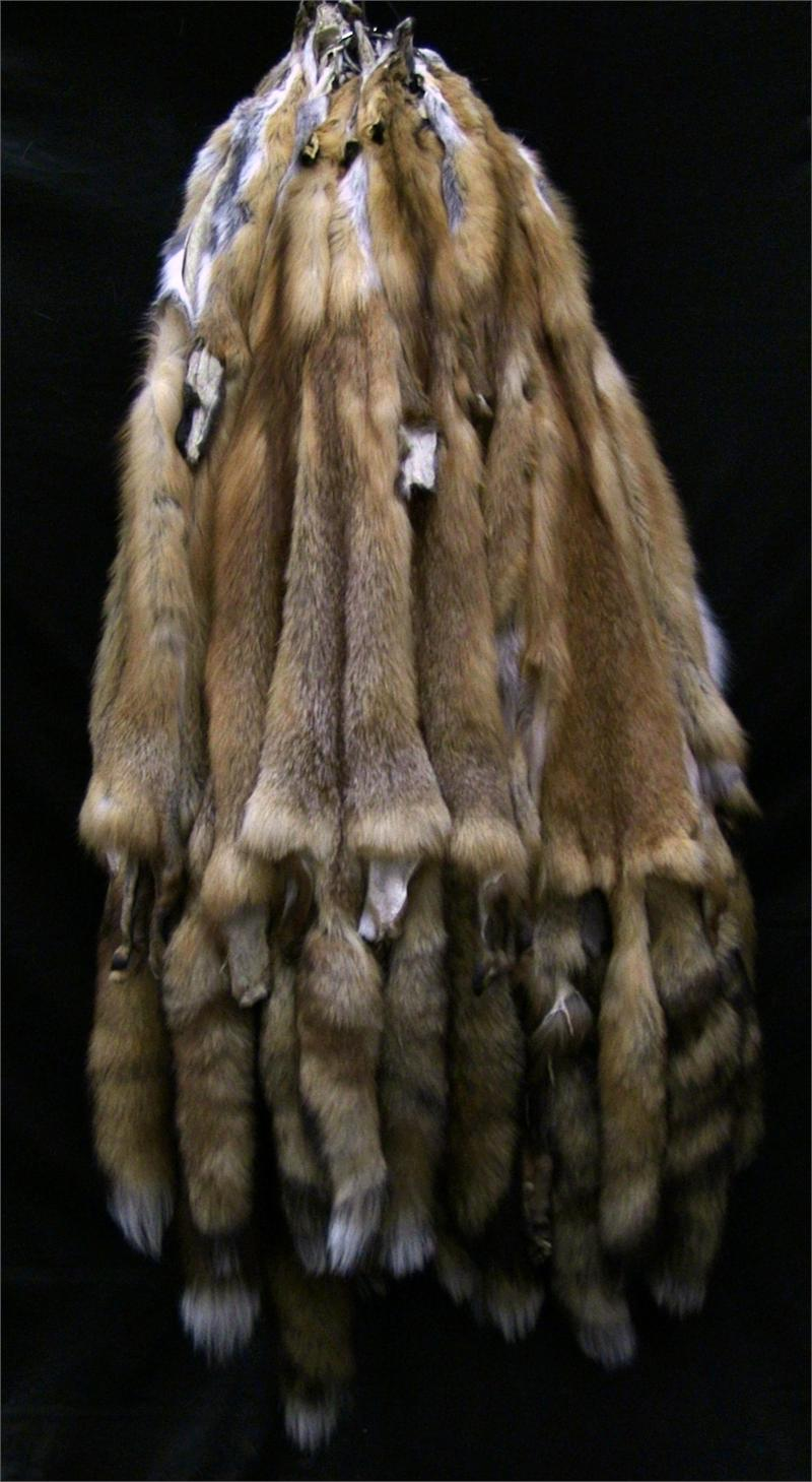 Used Clothing Wholesale >> AuSable™ Brand Tanned Red Fox Fur Pelts Bulk Fur