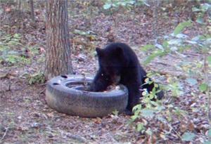 Bear Potion 2