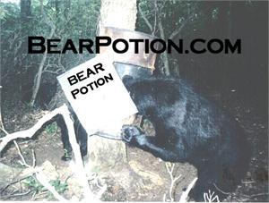 Bear Potion #1