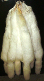Wholesale Tanned Pelts