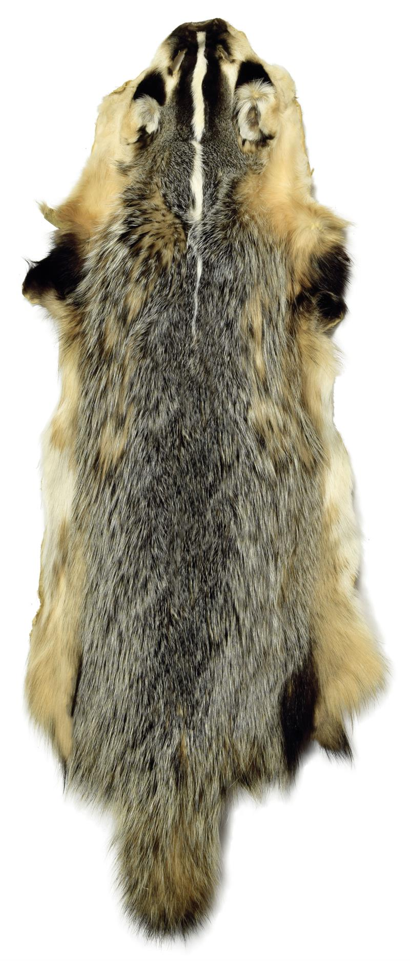 2734ae4f2d836 Tanned Badger Fur Pelt XL with Face & Tail