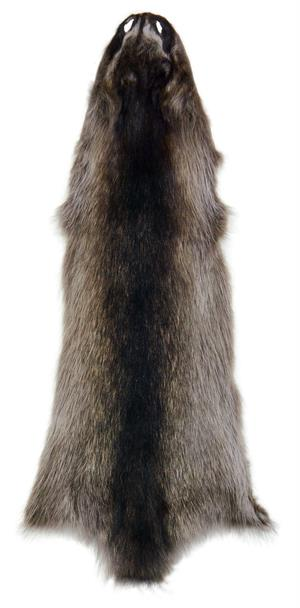 AuSable Fur Tanned Silver Satin X Large Raccoon Fur Pelt No Tail