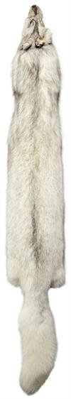 AuSable Blue Fox Tanned Fur Pelt with Tail 58