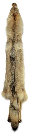 AuSable Coyote Tanned Fur Pelt with Tail & Feet 57